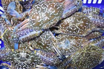 List chợ hải sản giá rẻ cho du khách đến FLC Sầm Sơn Villa