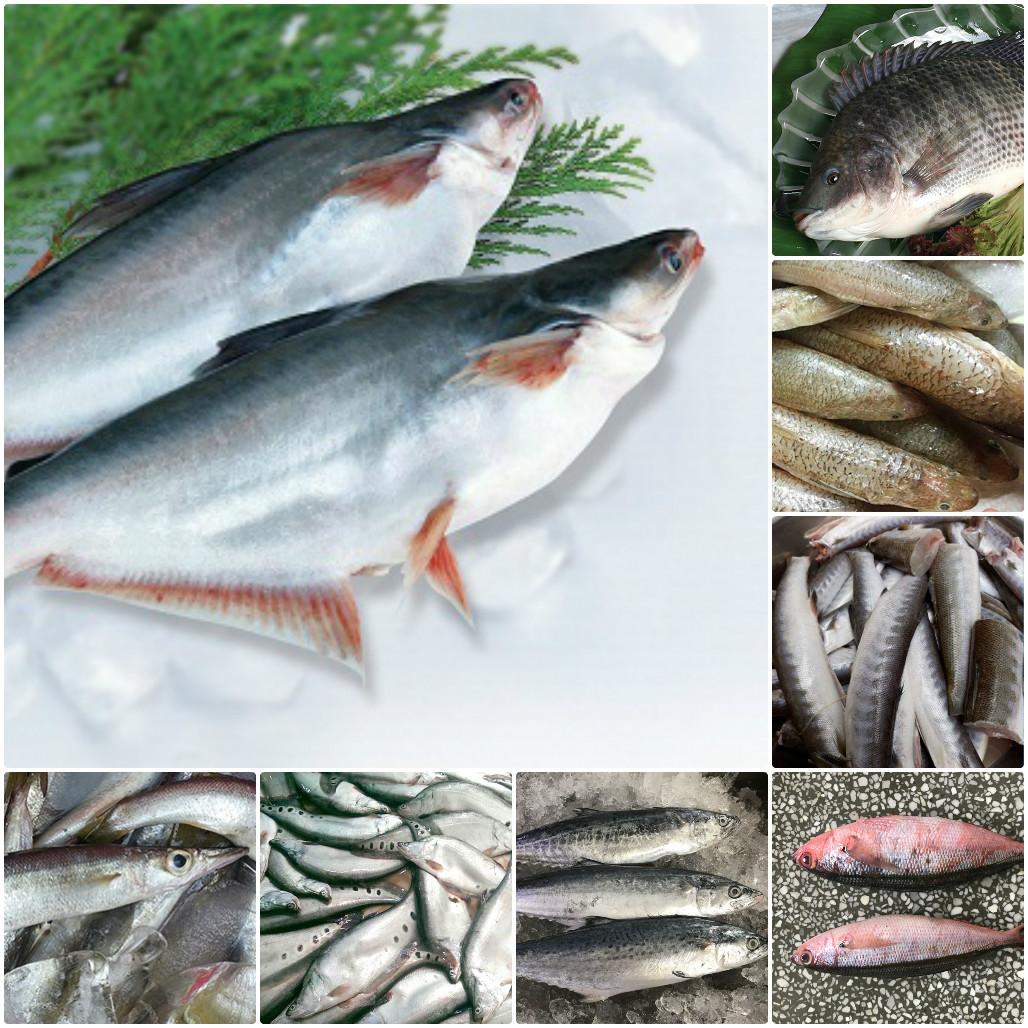một số loại cá để làm chả